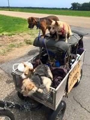 Бездомен човек пътешества от Калифорния до Индианаполис със своите 10 кучета