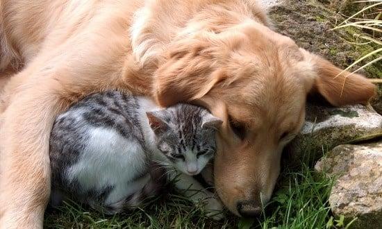 Приют в Русе отчете много повече осиновени и кастрирани животни