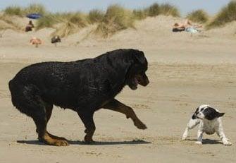 Причини за агресията между големите и малките кучета
