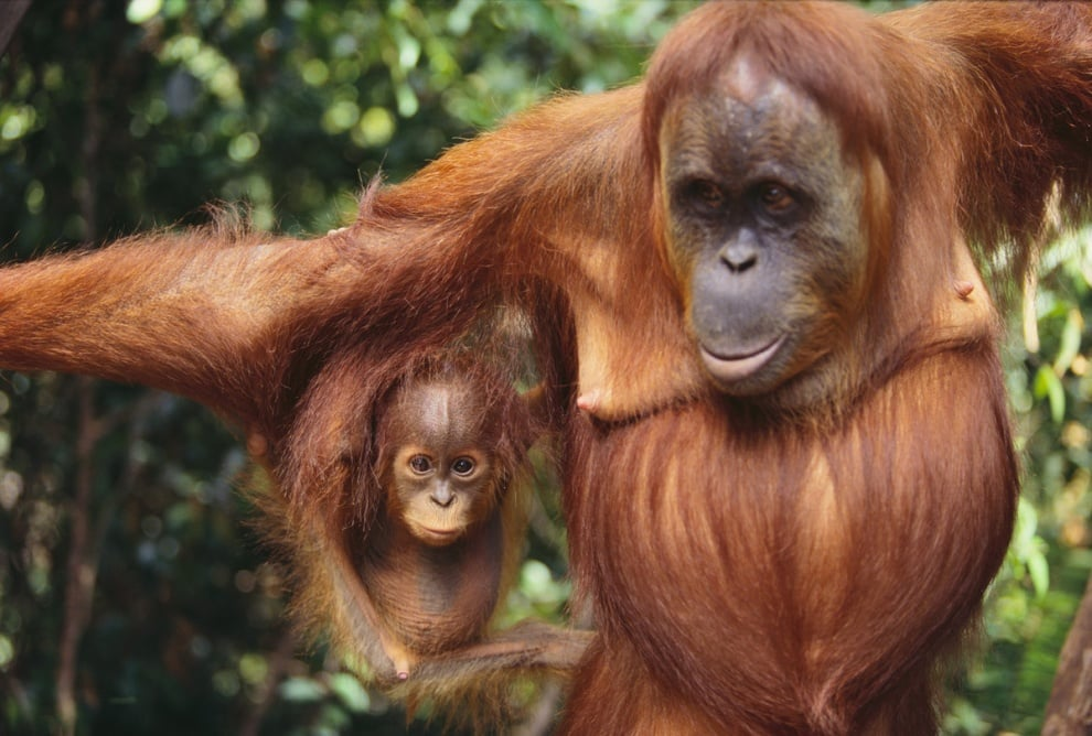 Сериозни проблеми очакват бозайниците заради климатичните промени