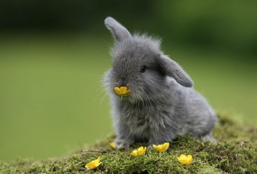 Интересни факти за зайците