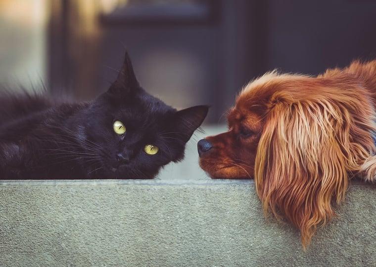 Чревни паразити при животните - симптоми и информация