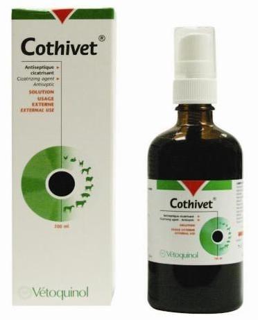 Котивет