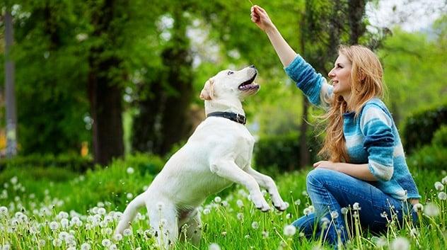 Ето как да направим любима играчка на кучето за 5 минути без парични средства