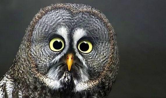 Петнайсетте най - забавни снимки на учудени животни