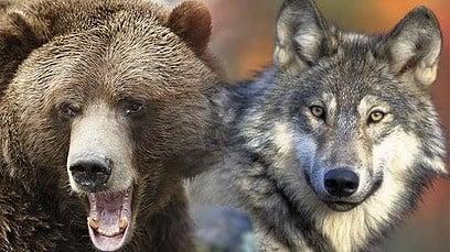 Изненадващо - броят на дивите животни в Европа се увеличава