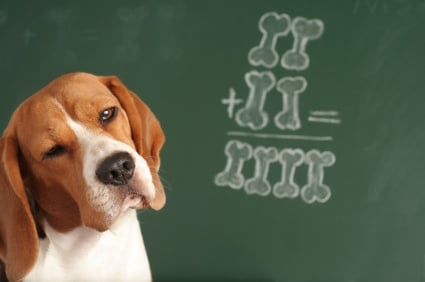 Уникален експеримент със студенти и кучета
