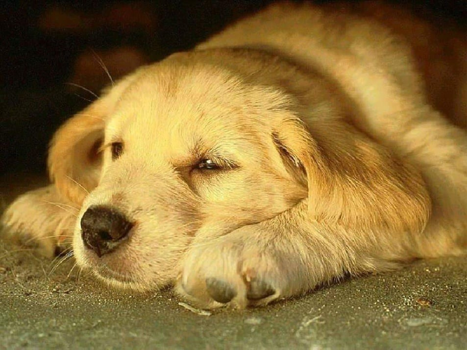 Кога се налага евтаназия на кучето?