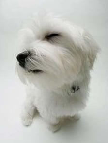 Фарингит при кучето