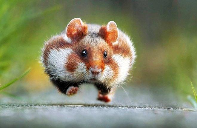 Вижте финалистите в конкурса за комични снимки на диви животни