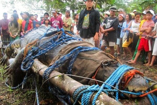Почина най - големият крокодил