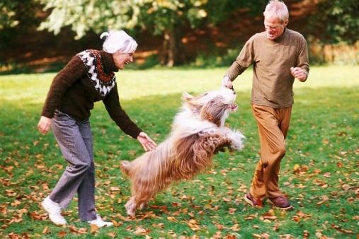 Кои кучета стават по - малко игриви, когато остареят?