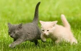 Как да научите котката си да идва при вас след като я повикате?
