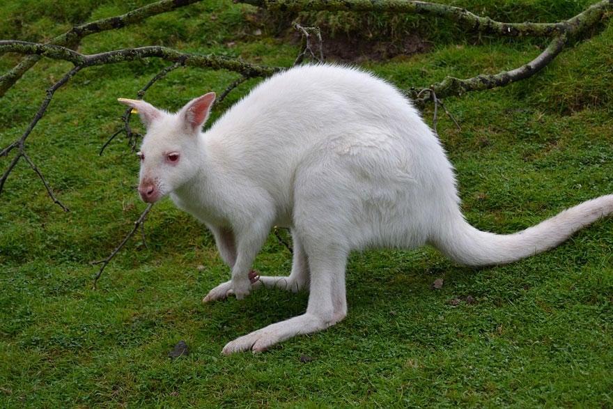 Животни албиноси, или когато природата пропусне да добави цвят (втора част)