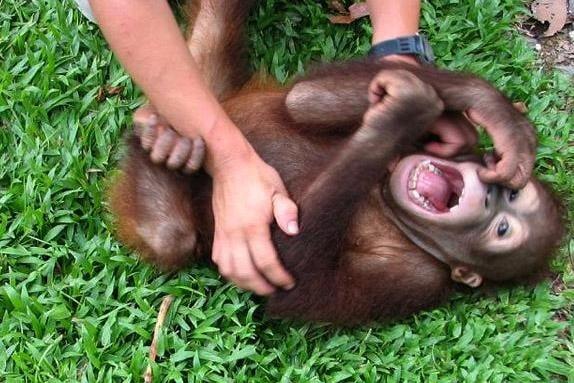 Животните също имат гъдел