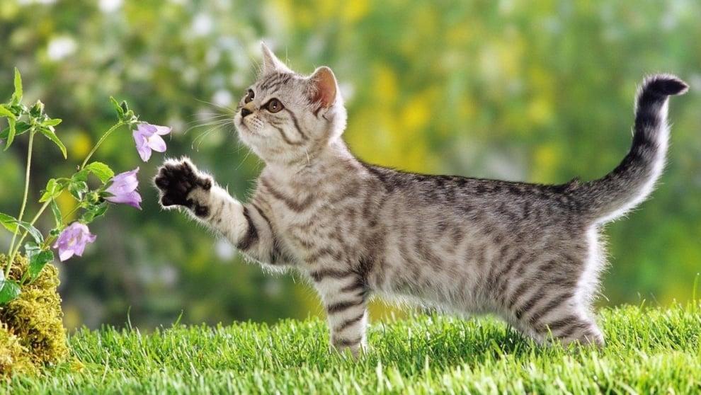 Къде отива котката като изчезне?