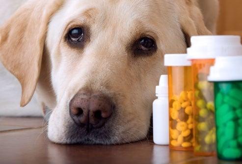 Как да давате лекарства на кучето?