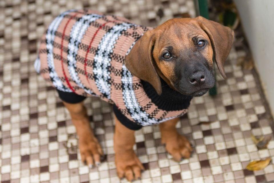 Полезни съвети как кучето да бъде на сухо и топло през зимата