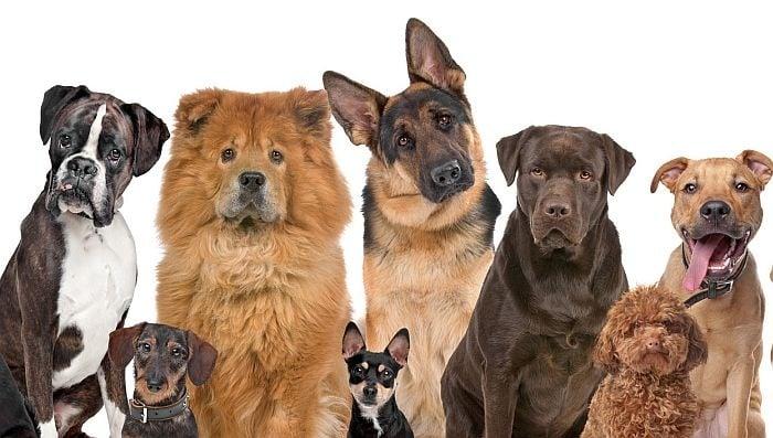 Как да изберем най - подходящата порода куче за нашето семейство?