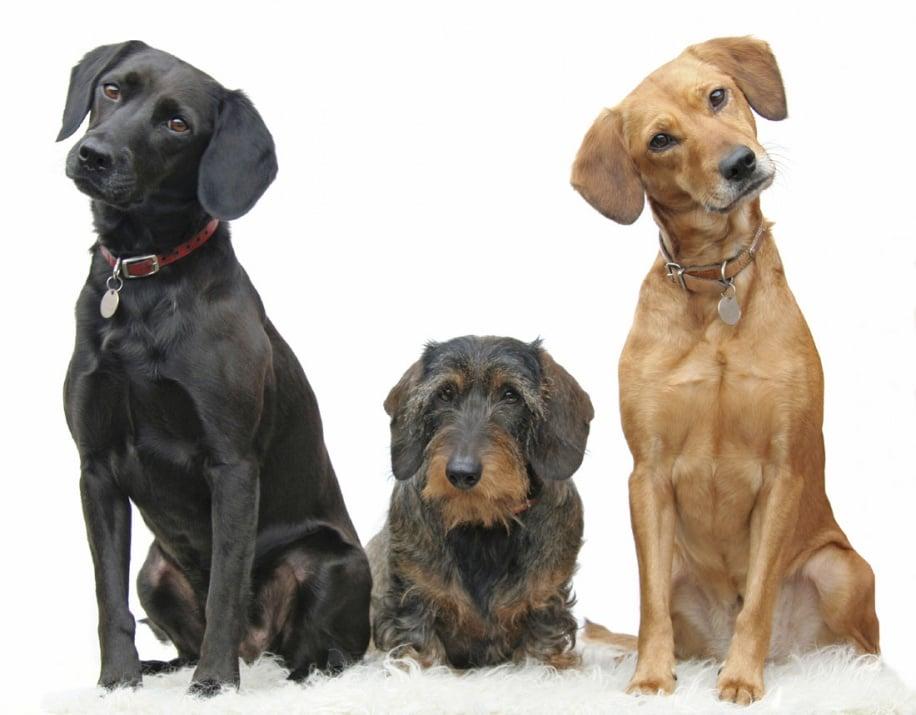 Обучение на кучето: Урок №16. Научете кучето на командата