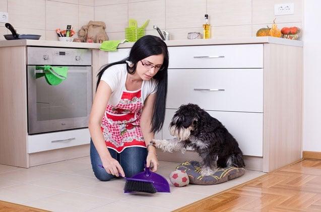 7 лесни начина за поддържане на дома чист по време на смяна на кучешката и котешката козина