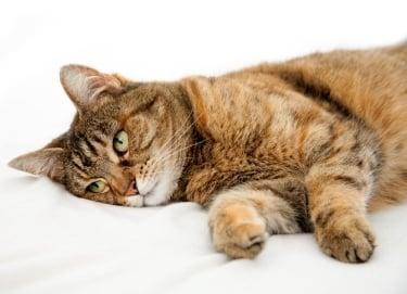 Как да разберем, че котката е болна?