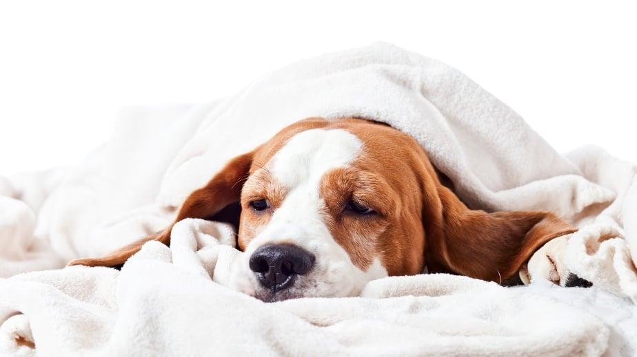 Как да разберем, че кучето е болно?