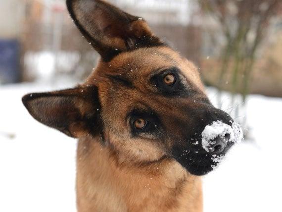 Как да се грижим правилно за кучето през зимата?