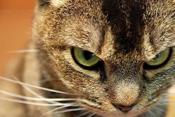 Как да се справим с лошото поведение на котката си?
