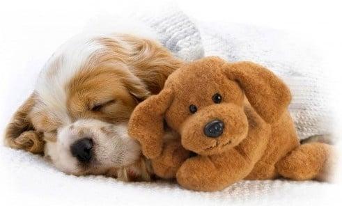 Как да се грижим за нашето ново кученце?