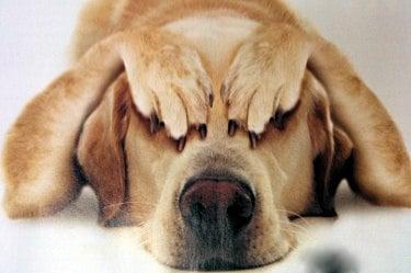 Как се слагат капки за очи/мехлем на куче?