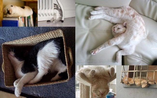 Как спят котките - 25 любими пози