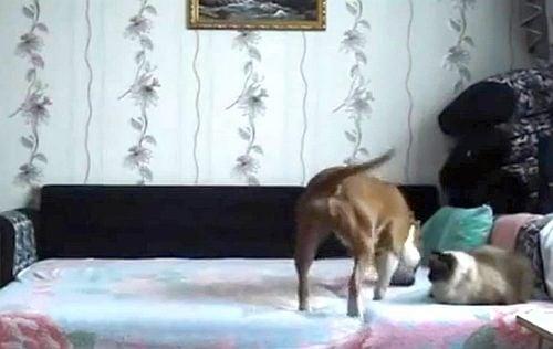 Какво прави кучето ни, когато никой не го вижда? (скрита камера)