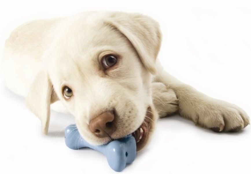 Избор на играчка за кучето