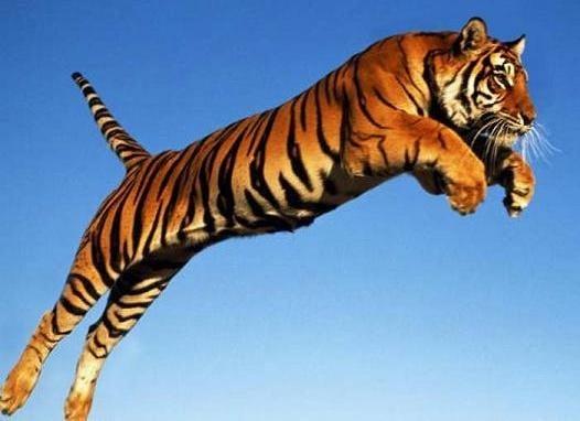Кой колко високо скача?