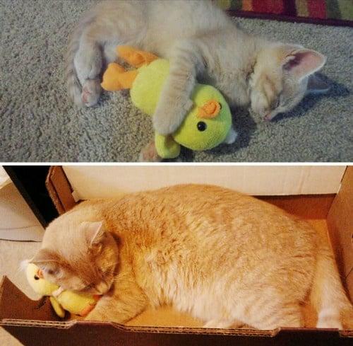 Сладки снимки на кучета и котки, които израстват със своите любими играчки