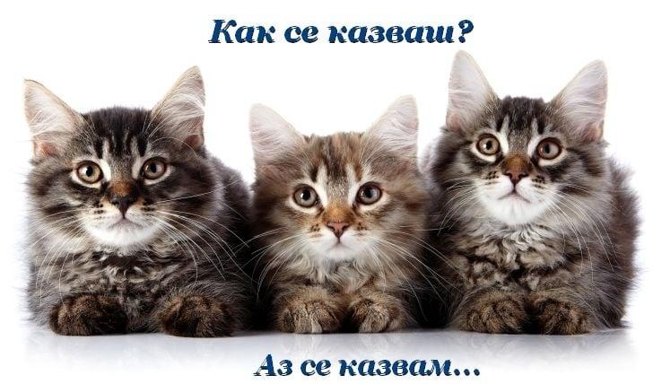 Котешки имена
