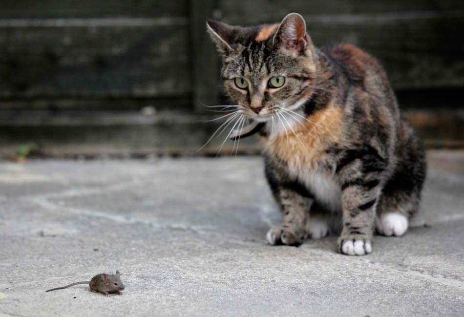 За котките и мишките ...