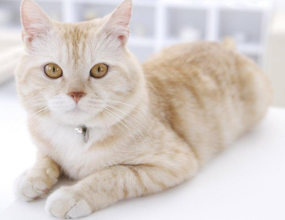 Какво да очакваме от котката, когато навърши 1 година?