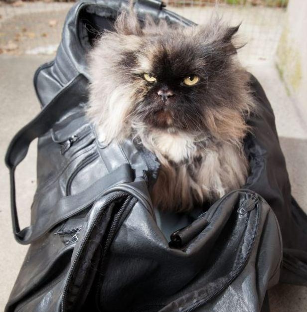 Котка оцелява след 5 000 километрово пътешествие, затворена в куфар