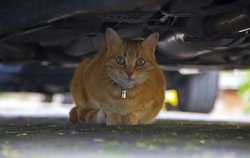 Котка предотвратява смъртта на стопанина си, като ляга под колата му
