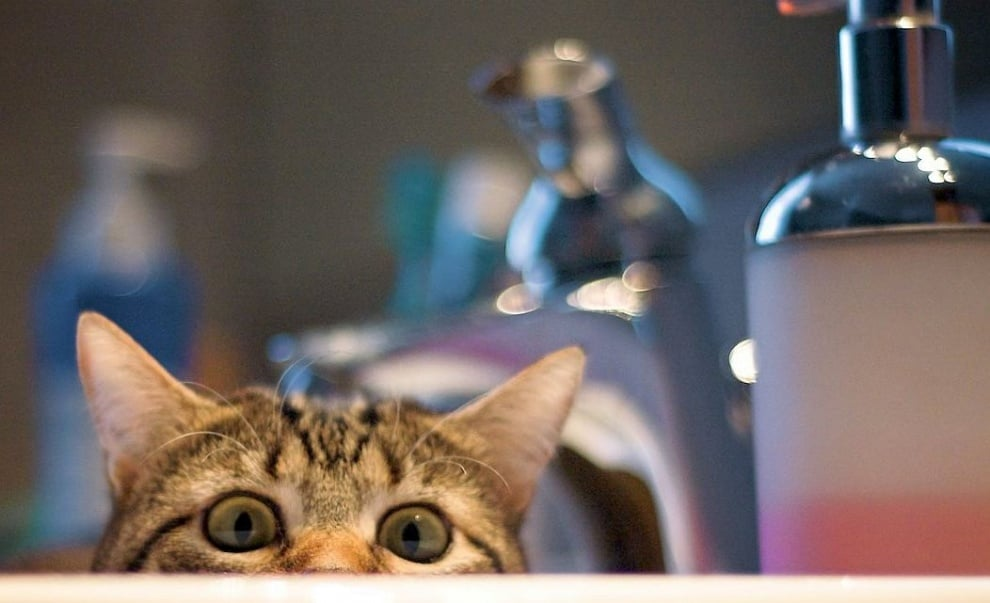 Котки, които си мислят, че са се скрили добре