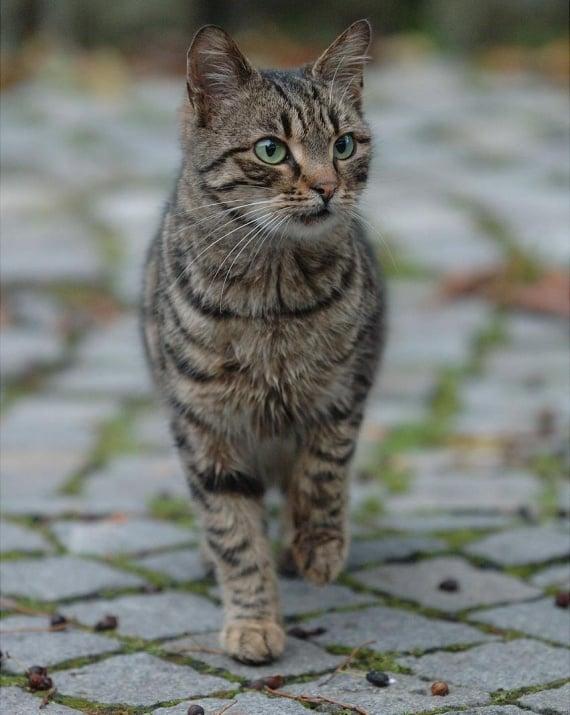 Домашни котки - убийци ?!