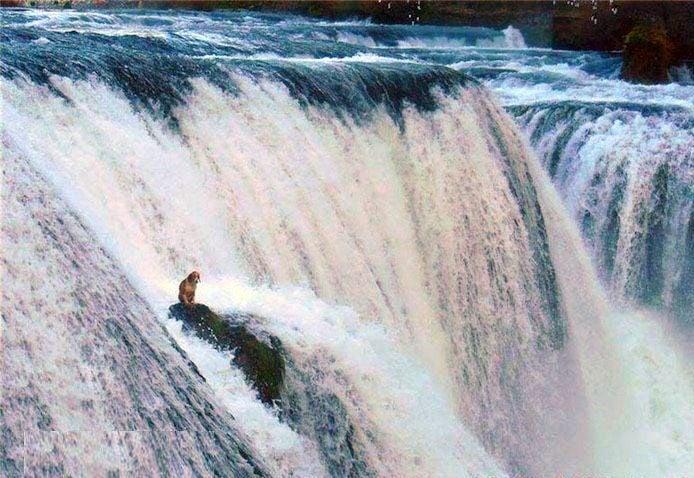 Куче се озова на скала по средата на огромен водопад