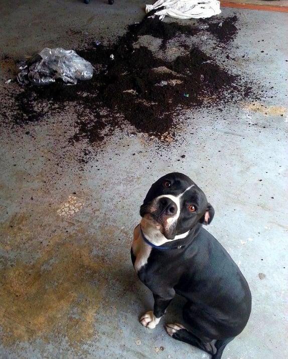 Кучета, които нямат представа от къде идва цялата тази бъркотия