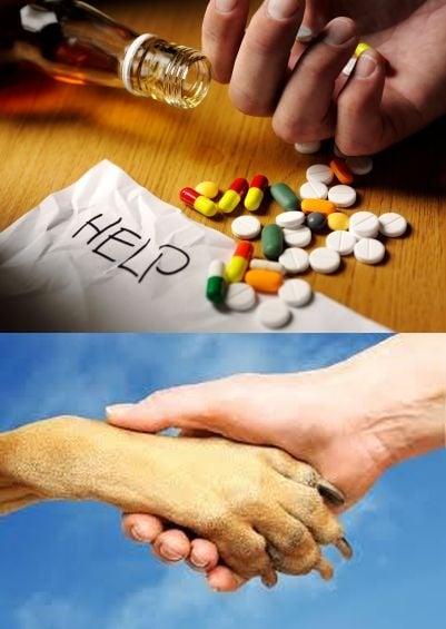 Отглеждането на куче помага на наркозависимите