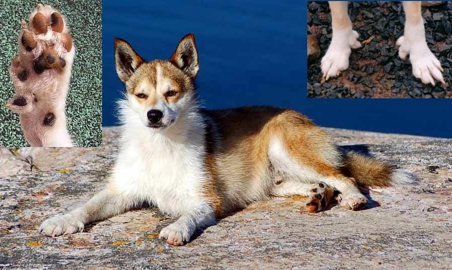 Кучето с най - много пръсти в света