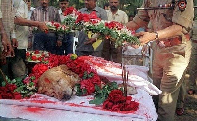 Кучето Занжир, спасило хиляди човешки животи по време на бомбардировките в Мумбай