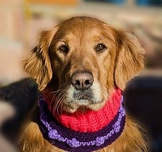 Ларингит при кучето