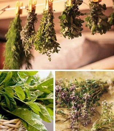 Събиране, сушене на билките и съхраняване на дрогите, получени от тях